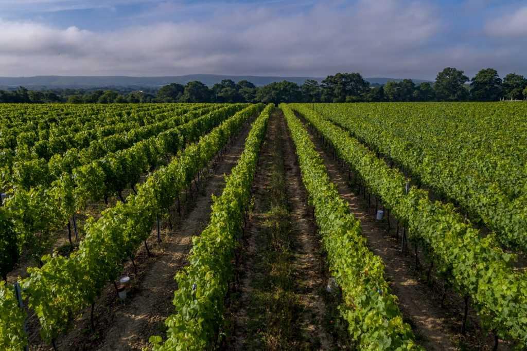 Ridgeview Winery Estate Sussex